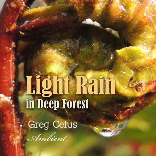 Light Rain in Deep Forest, Greg Cetus