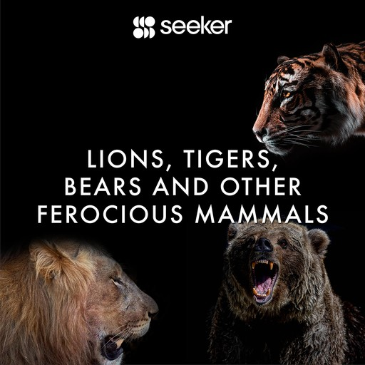 Lions, Tigers, Bears and Other Ferocious Mammals, Seeker