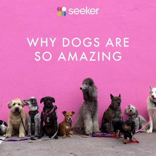Why Dogs Are So Amazing, Seeker