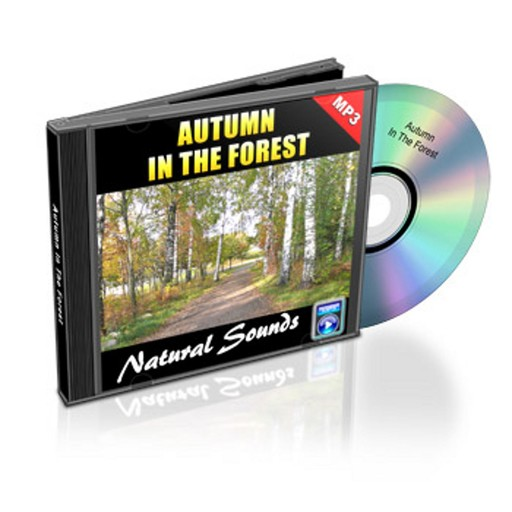 Autumn In The Forest - Relaxation Music and Sounds, Empowered Living