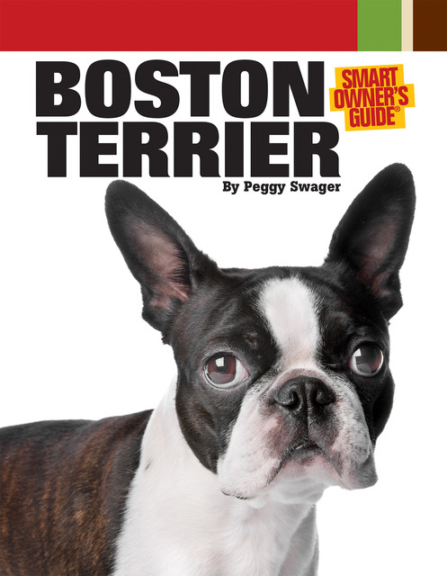 Boston Terrier, Peggy Swager
