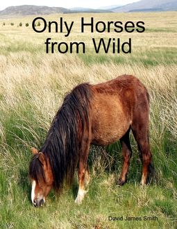 Only Horses from Wild, David Smith