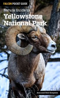 Nature Guide to Yellowstone National Park, Ann Simpson, Rob Simpson