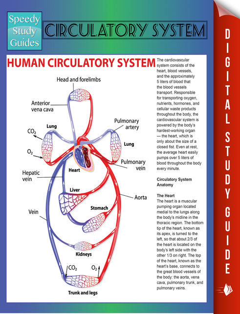 Circulatory System (Speedy Study Guides), Speedy Publishing