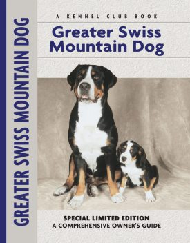 Greater Swiss Mountain Dog, Nikki Moustaki