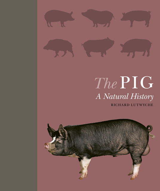 The Pig, Richard Lutwyche