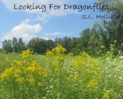 Looking For Dragonflies, S.L. Hollister