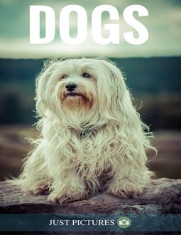 Dogs, Just Pictures