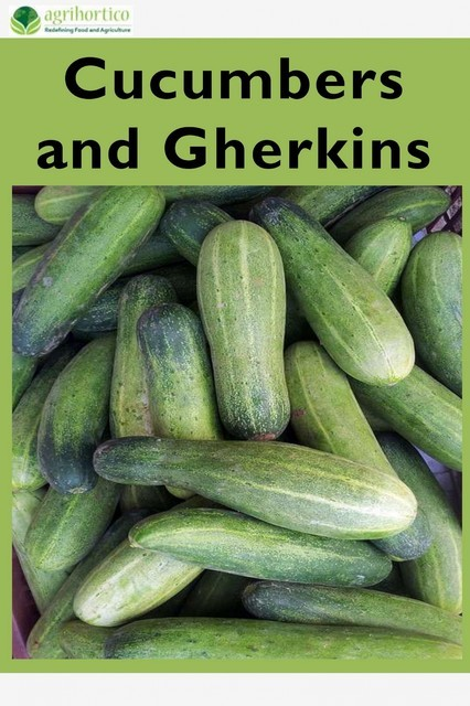 Cucumbers and Gherkins, Agrihortico CPL