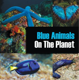 Blue Animals On The Planet, Baby Professor