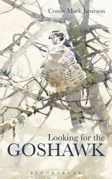 Looking for the Goshawk, Conor Mark Jameson