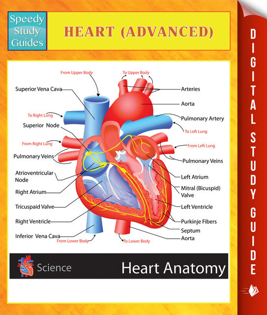 Heart (Advanced) Speedy Study Guides, Speedy Publishing