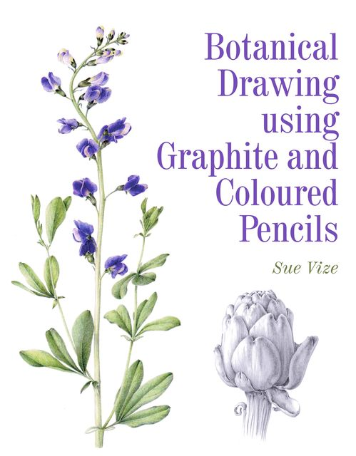 Botanical Drawing using Graphite and Coloured Pencils, Sue Vize