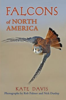 Falcons of North America, Kate Davis