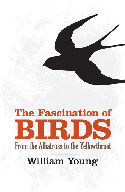 The Fascination of Birds, William Young
