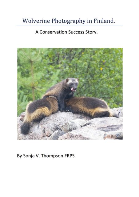 Wolverine Photography in Finland: A Conservation Success Story, Sonja V. Thompson FRPS