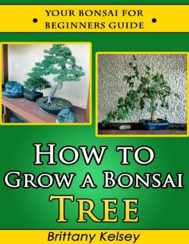 How to Grow a Bonsai Tree: Your Bonsai for Beginners Guide, Brittany Kelsey