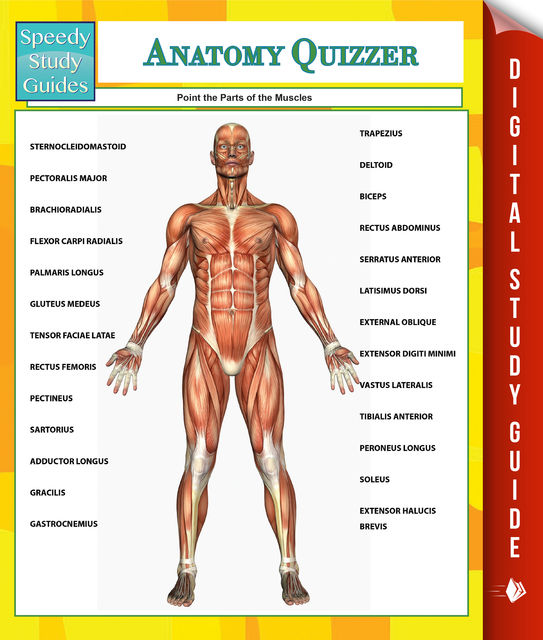 Anatomy Quizzer (Speedy Study Guides), Speedy Publishing