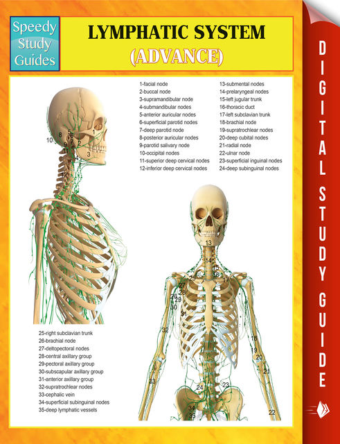 Lymphatic System (Advanced) Speedy Study Guides, Speedy Publishing