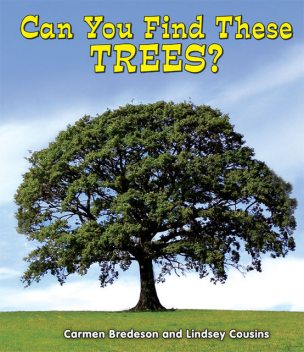 Can You Find These Trees?, Carmen Bredeson, Lindsey Cousins