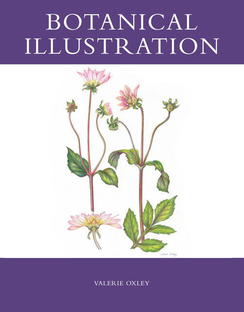 Botanical Illustration, Valerie Oxley
