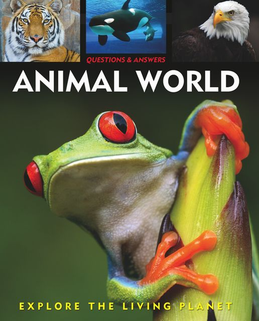 Questions and Answers about: Animal World, Alex Woolf, Rebecca Gerlings