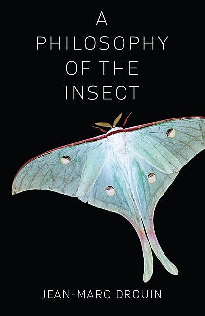 A Philosophy of the Insect, Jean-Marc Drouin
