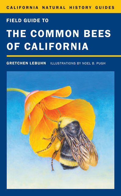 Field Guide to the Common Bees of California, Gretchen LeBuhn