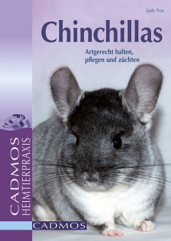 Chinchillas, Judy Fox