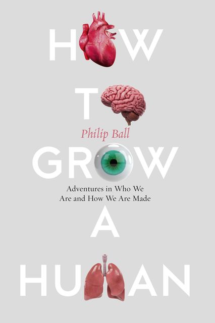How to Grow a Human, Philip Ball
