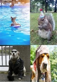 99 Cent Amazing Animals Hang Out, Nature Childrens eBooks