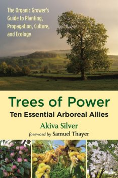 Trees of Power, Akiva Silver