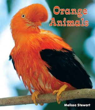 Orange Animals, Melissa Stewart