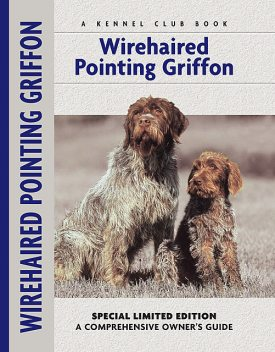 Wirehaired Pointing Griffon, Nikki Moustaki
