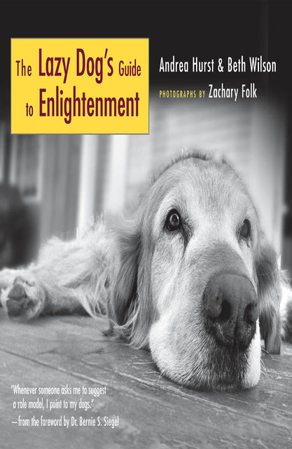 The Lazy Dog's Guide to Enlightenment, Beth Wilson