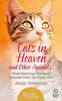 Cats in Heaven, Jacky Newcomb