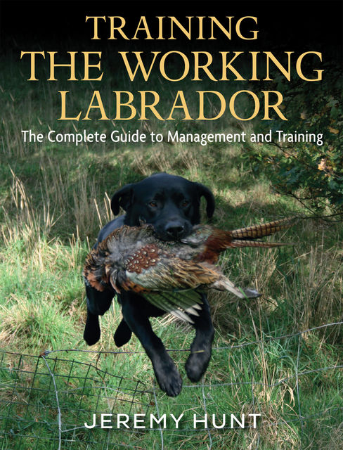 Training The Working Labrador, Jeremy Hunt