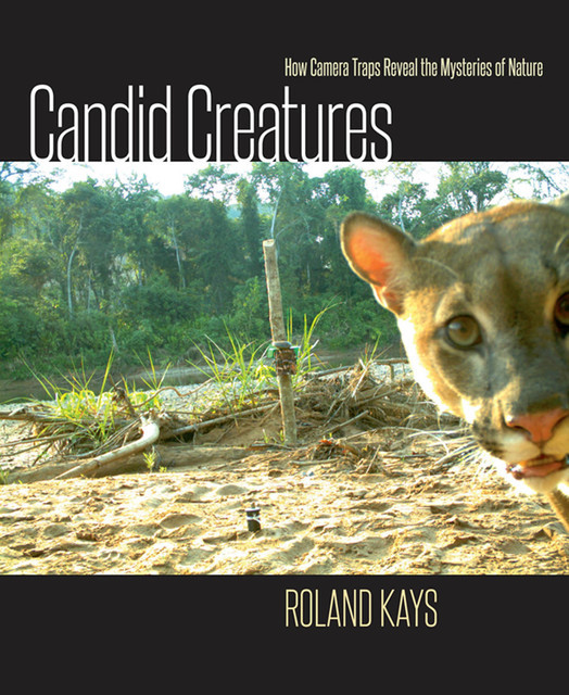 Candid Creatures, Roland Kays