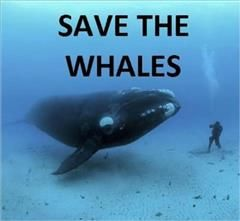 Save the Whales Photography,