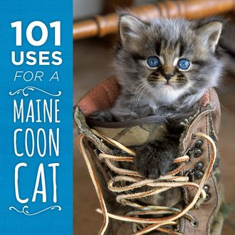 101 Uses for a Maine Coon Cat,