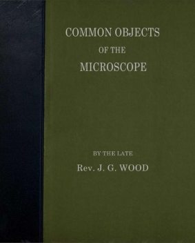 Common Objects of the Microscope, J.G. Wood