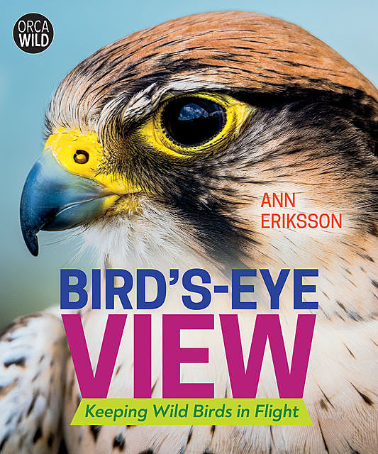 Bird's-Eye View, Ann Eriksson