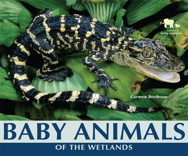 Baby Animals of the Wetlands, Carmen Bredeson
