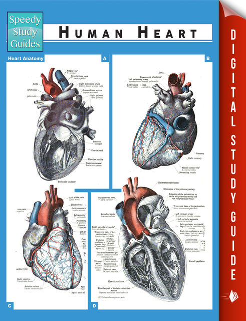 Human Heart (Speedy Study Guides), Speedy Publishing