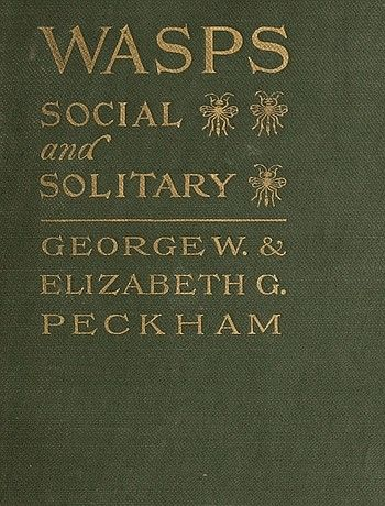 Wasps, Social and Solitary, E.G. Peckham