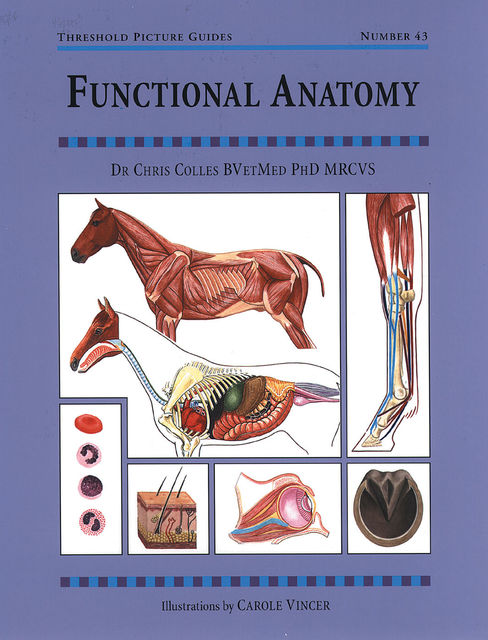 FUNCTIONAL ANATOMY, CHRIS COLLES
