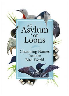An Asylum of Loons, Adventure Publications