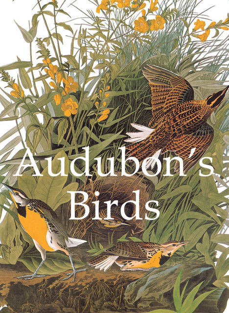 Audubon's Birds, John James Audubon
