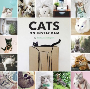 Cats on Instagram, @cats_of_instagram