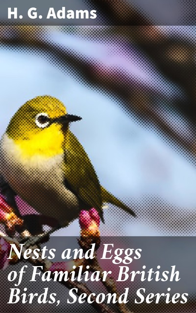 Nests and Eggs of Familiar British Birds, Second Series, H.G. Adams